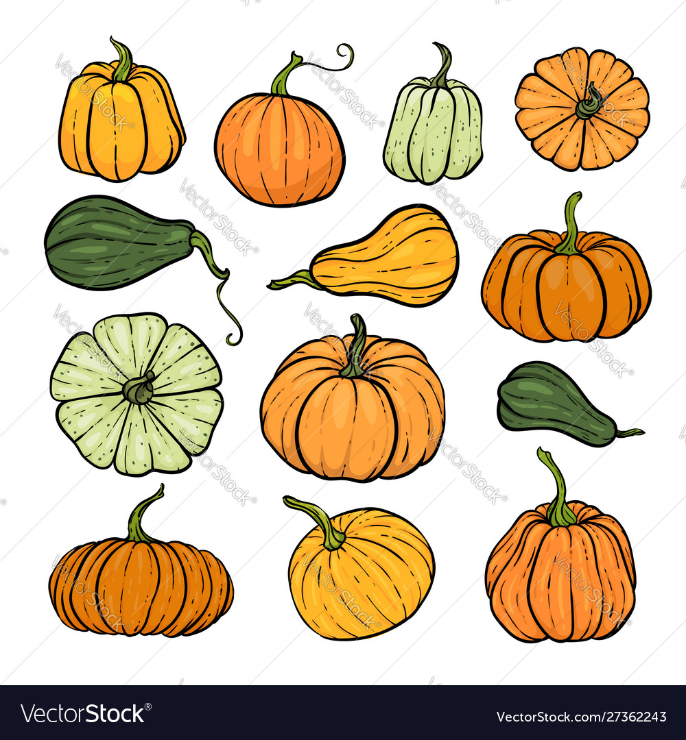 Set decorative orange and green pumpkins hand