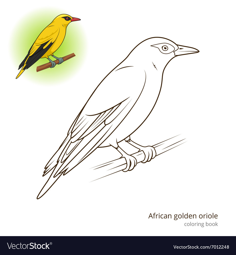 - African Golden Oriole Bird Coloring Book Vector Image