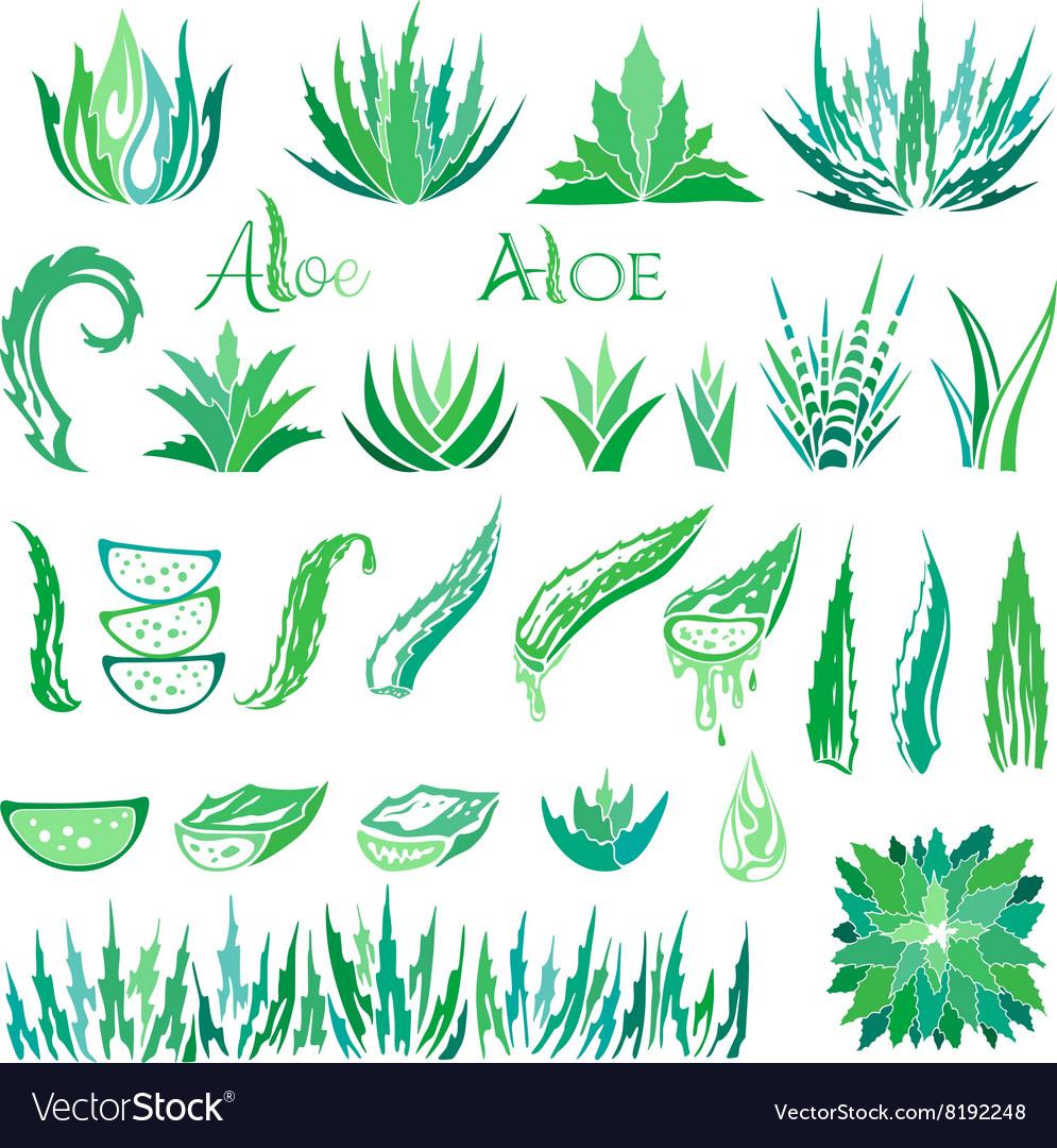 Aloe vera design elements Icons collection