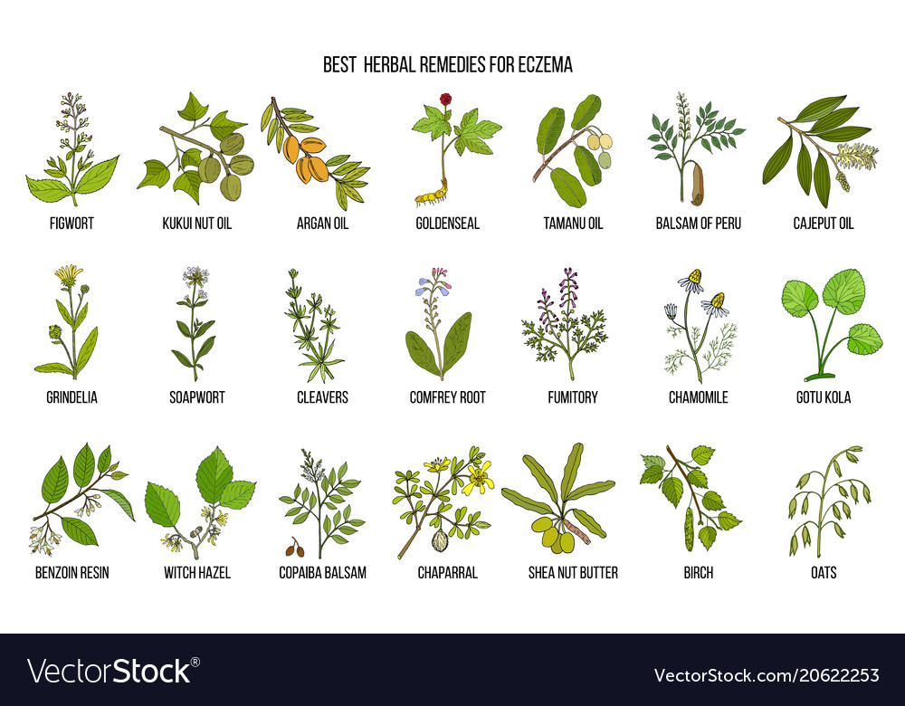 Best medicinal herbs for eczema vector image