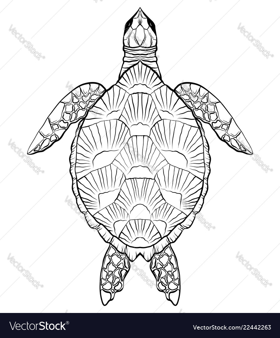 Contour black and white of turtle the object is