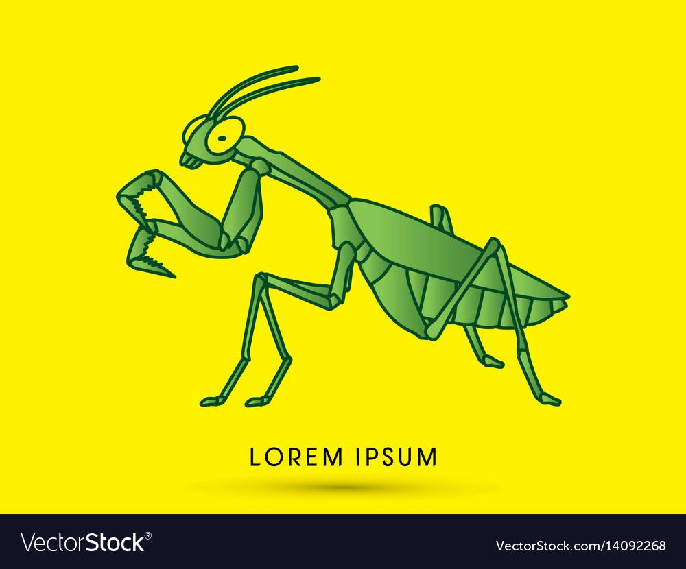 Mantis mantodea grasshopper