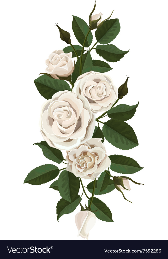 White roses flowers buds and leaves royalty free vector white roses flowers buds and leaves vector image mightylinksfo