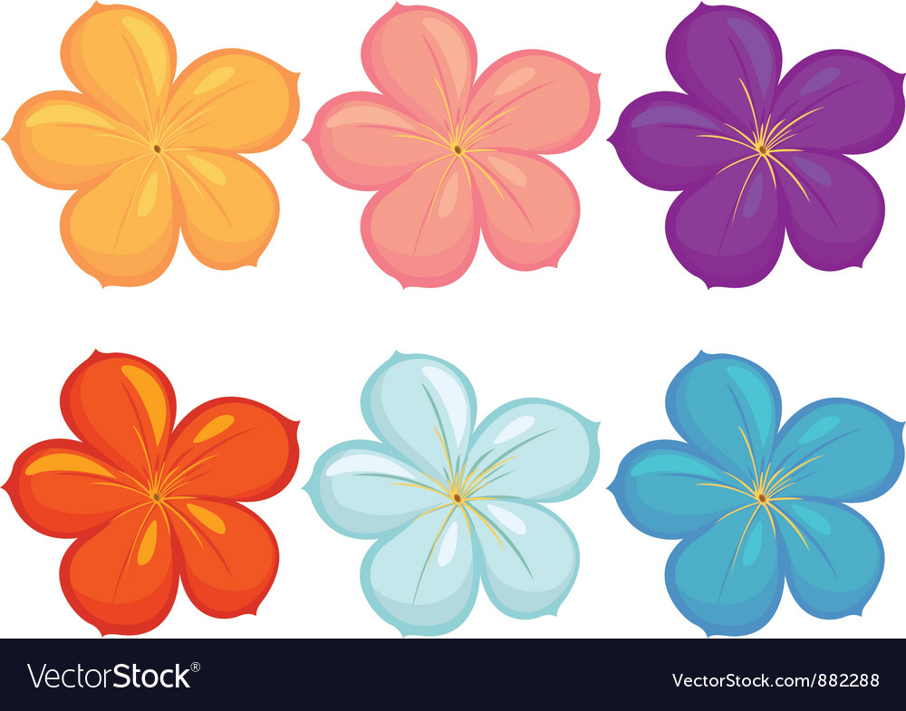 Flowers of different colours