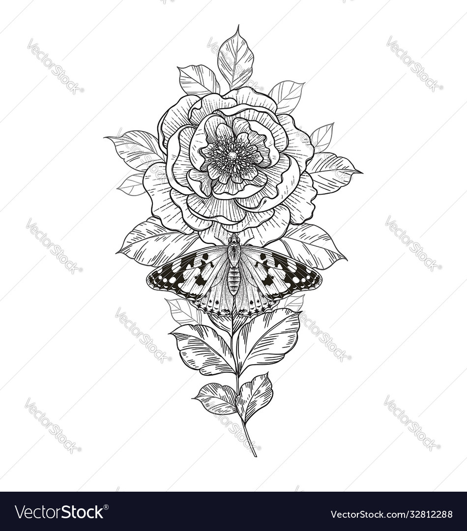 Hand drawn peony flower and butterfly