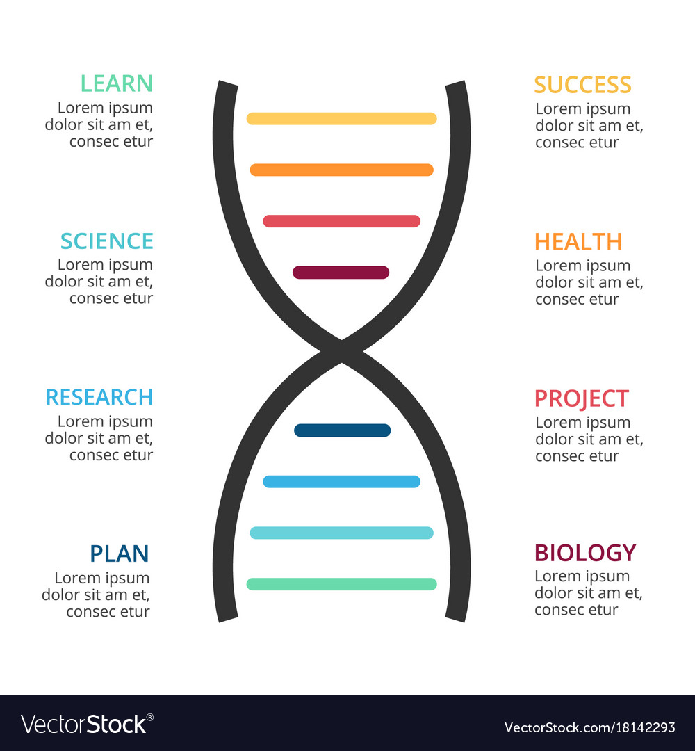 Dna science infographic medical diagram Royalty Free Vector