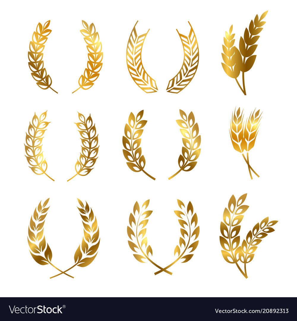 Golden rye wheat ears wreaths elements for vector image