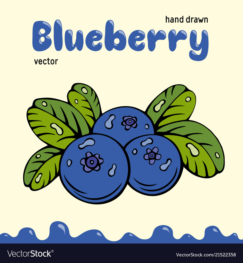 Blueberry berries images