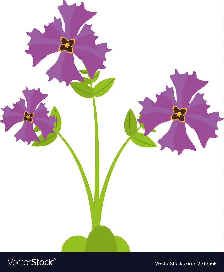 Iris Flower Garden Botanical Royalty Free Vector Image