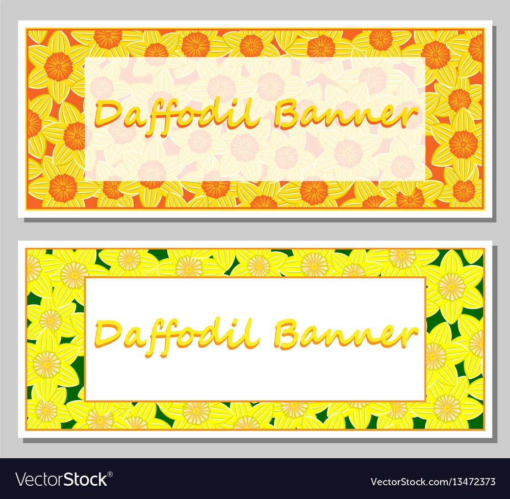 daffodil banner template royalty free vector image