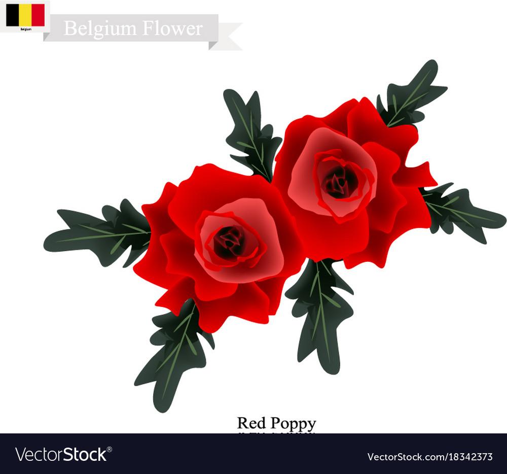 Red Poppies The Popular Flower Of Belgium Vector Image On Vectorstock