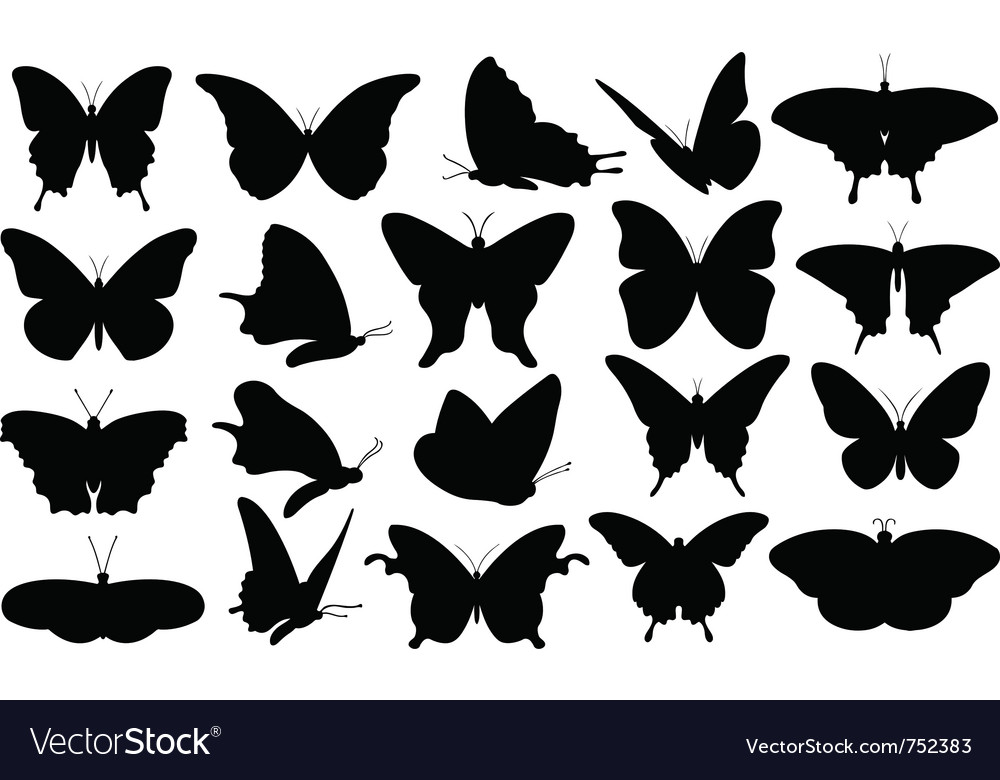 Butterfly collage vector image