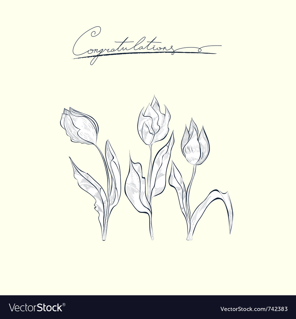 Congratulation card with tulips flower