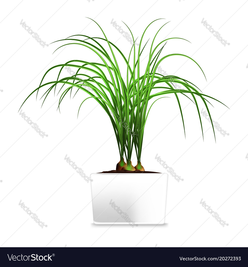 Spotted plant in a white pot element of home