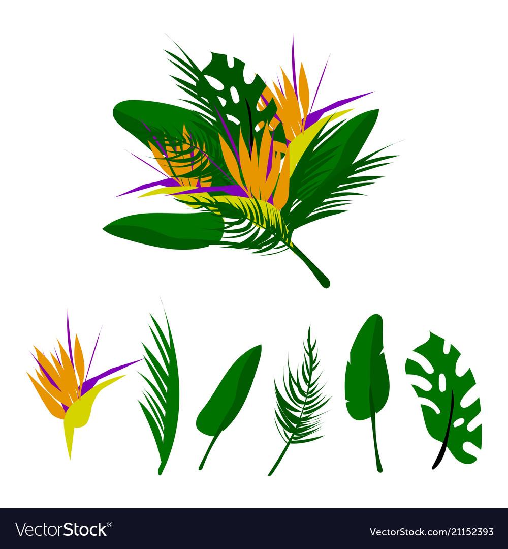Tropical floral set