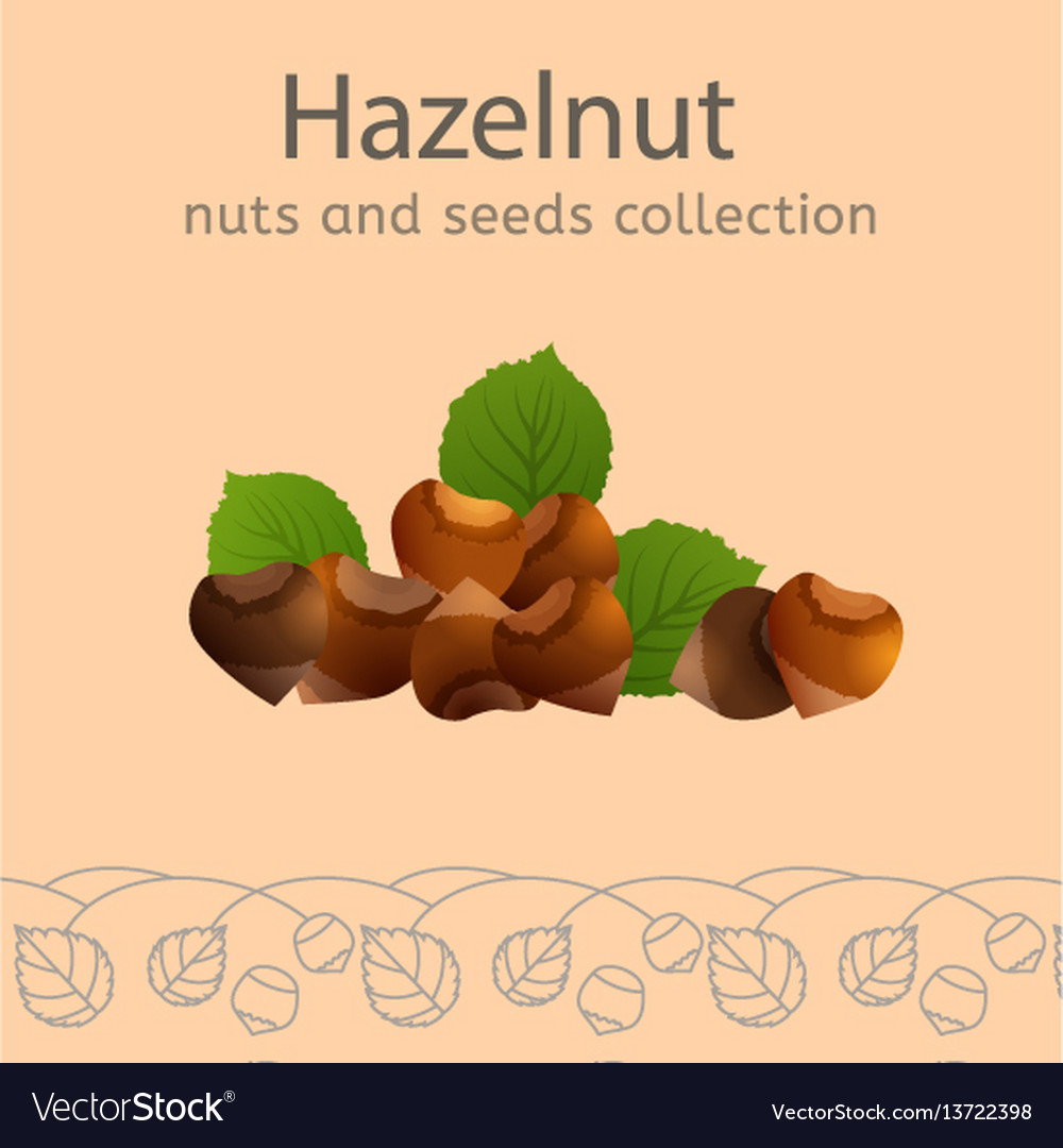 Nuts collection image