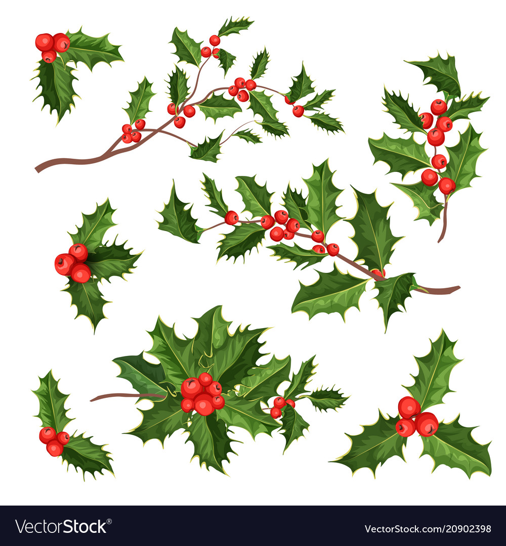 Realistic holly mistletoe leaves set