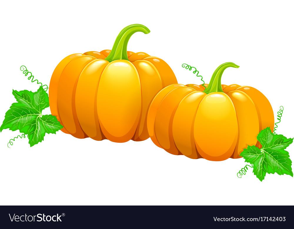 Two beautiful pumpkins