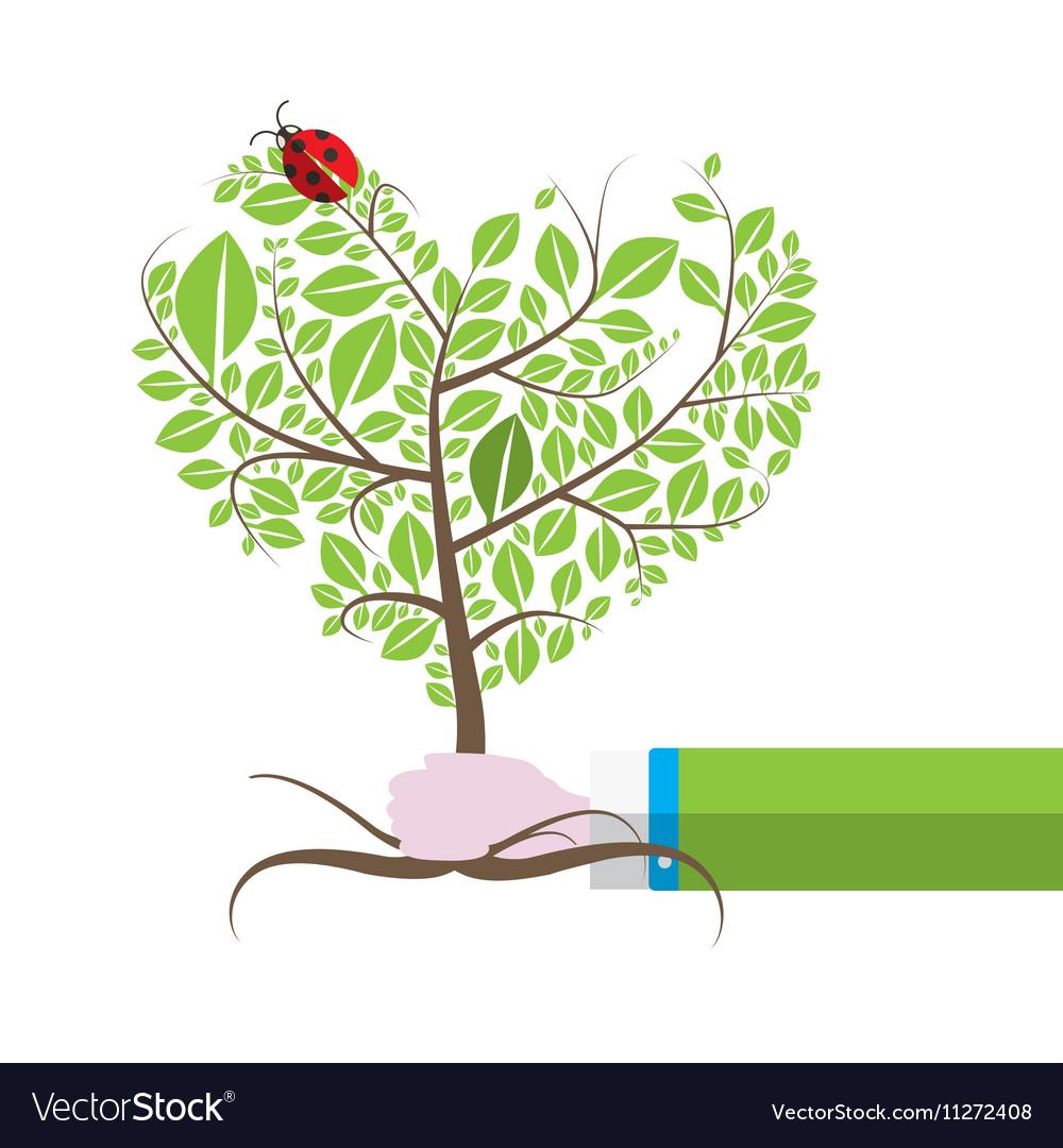 Tree in Human Hand with Ladybird Ladybug Isolated