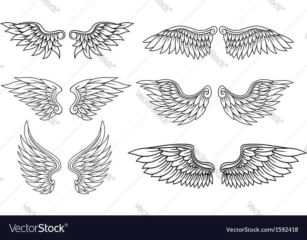 Set of eagle or angel wings vector image