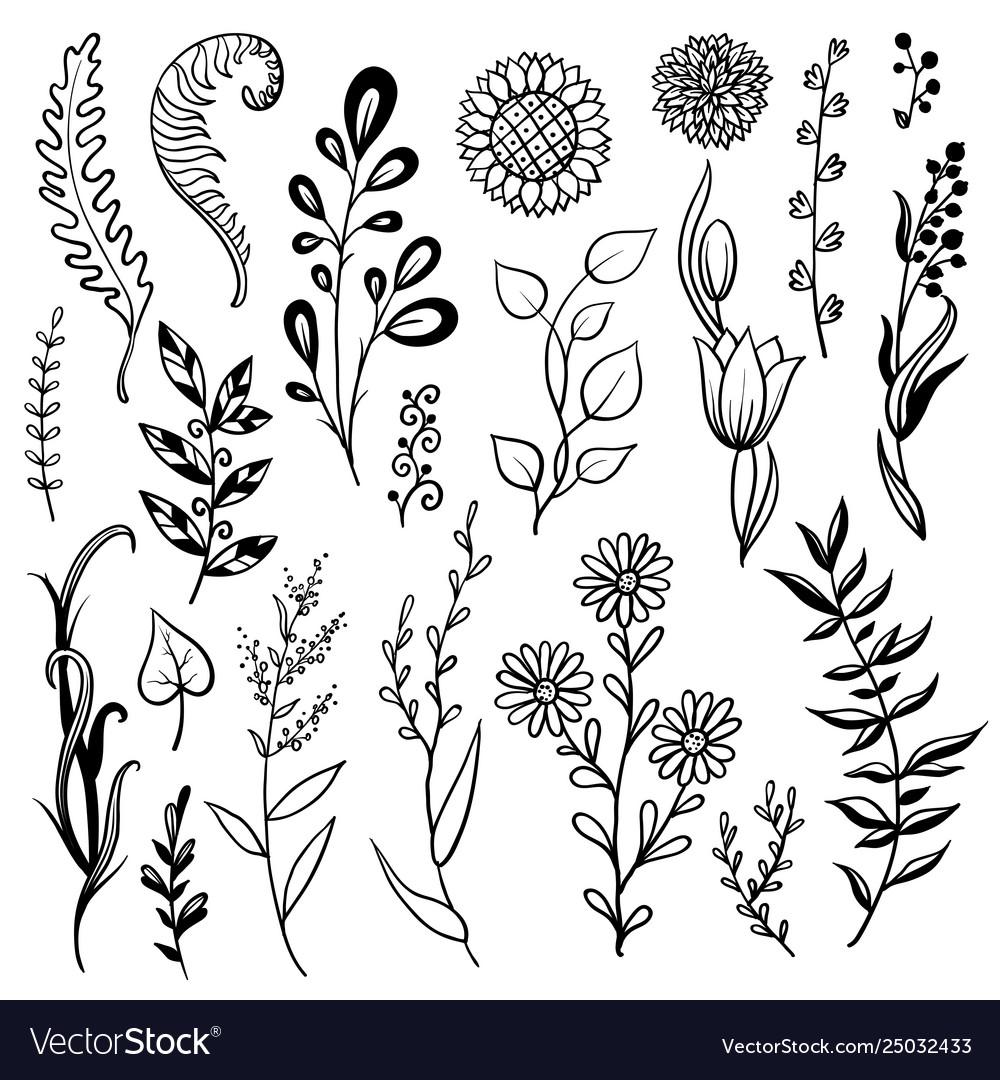 Set hand drawn plant herb flowers