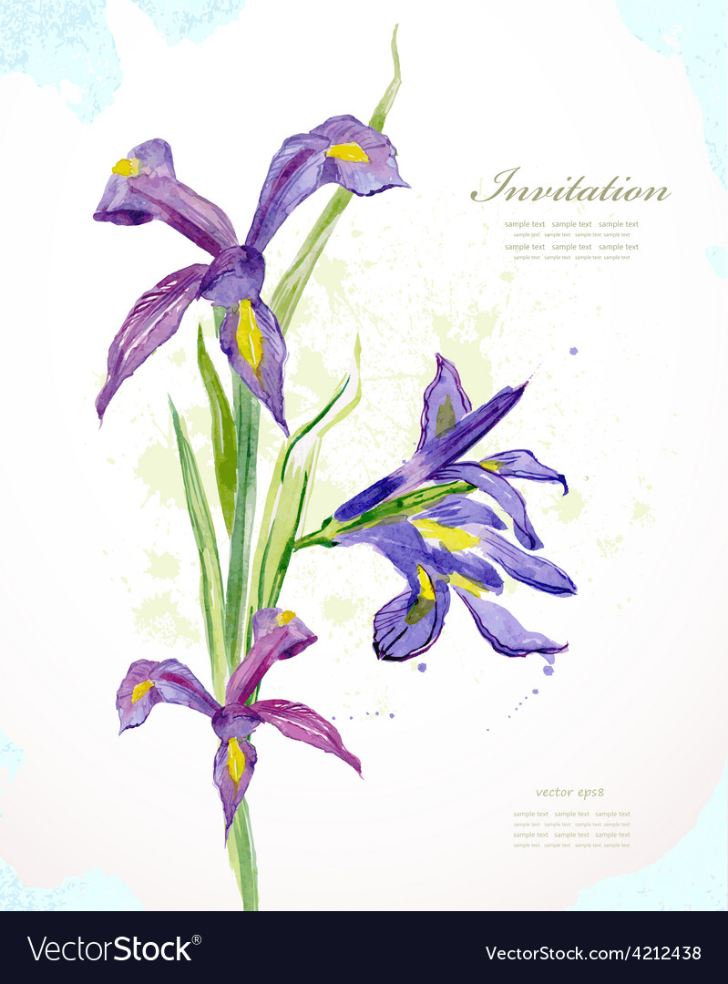 Invitation card with watercolor beautiful flowers vector image