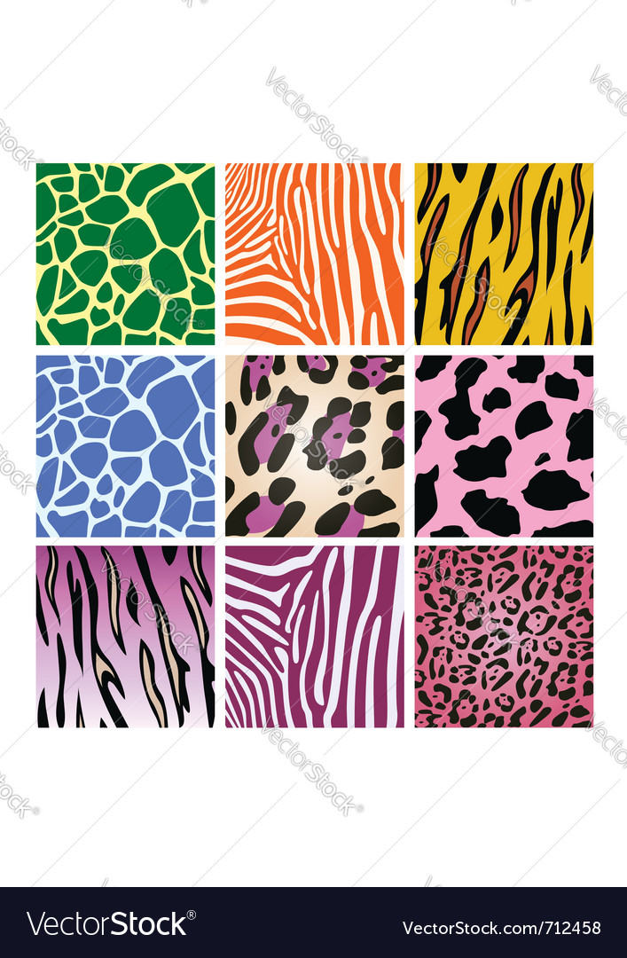 Colorful animal skin textures vector image