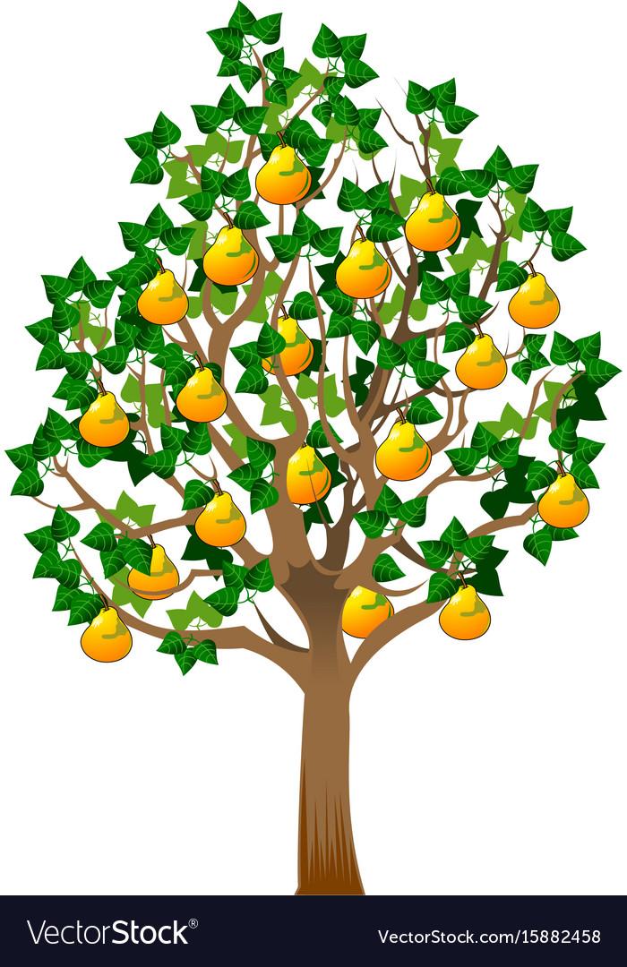 Грушевое дерево картинка для детей на прозрачном фоне