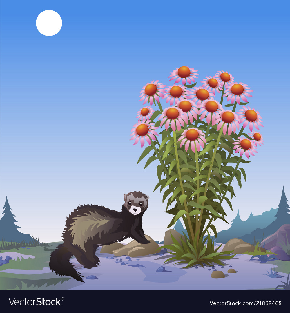 A poster on the theme of wildlife mongoose near