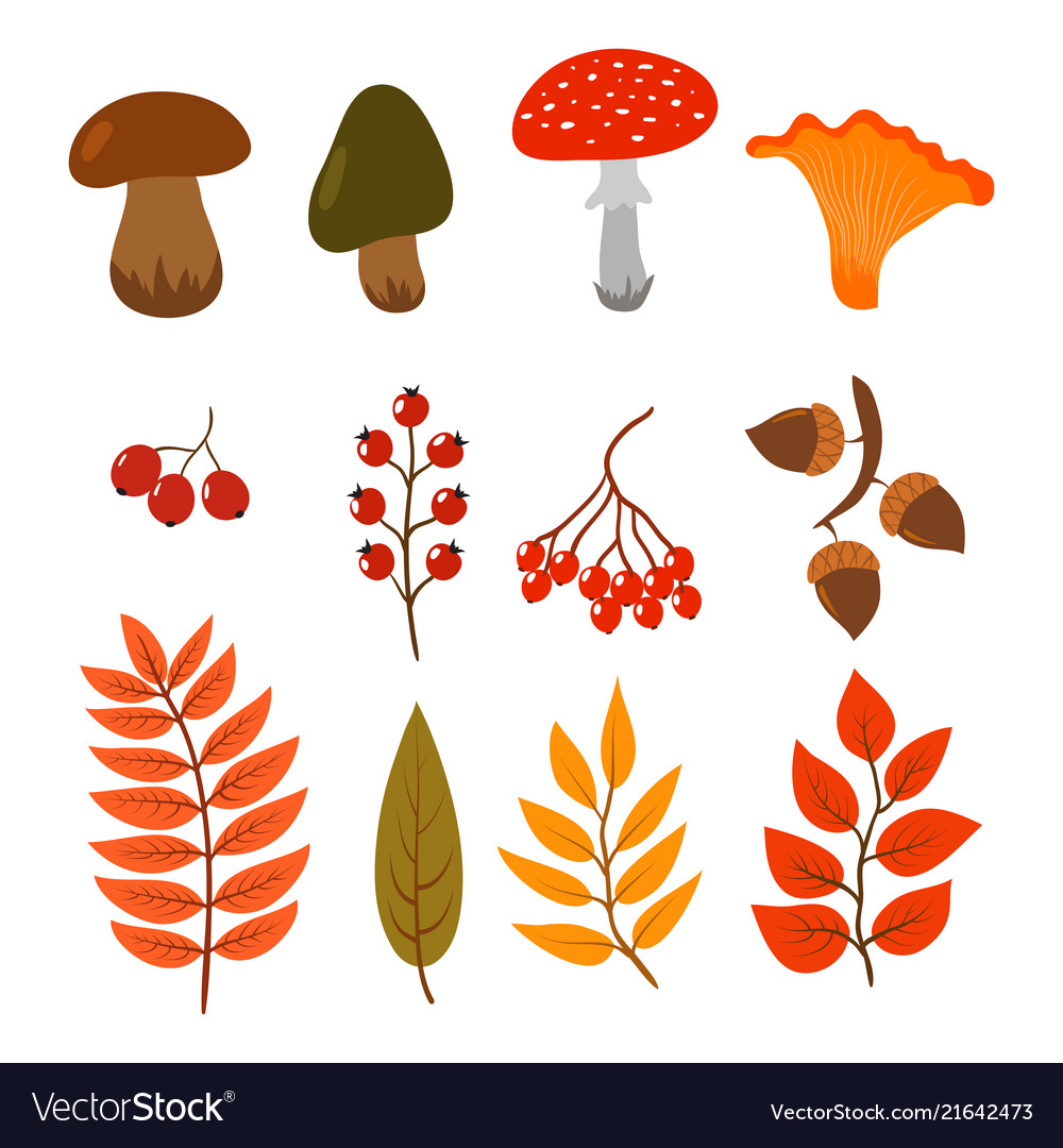 Autumn leaves mushrooms and berries isolated on