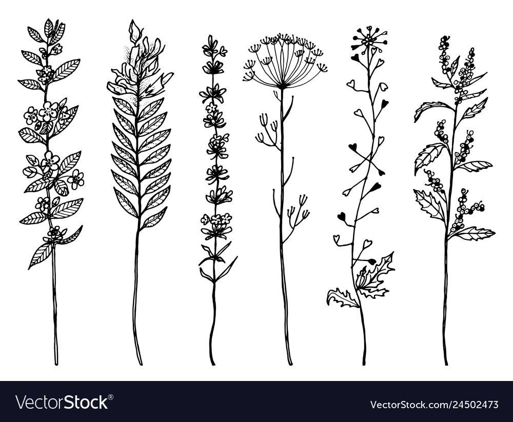 Field flowers with leaves set of wedding