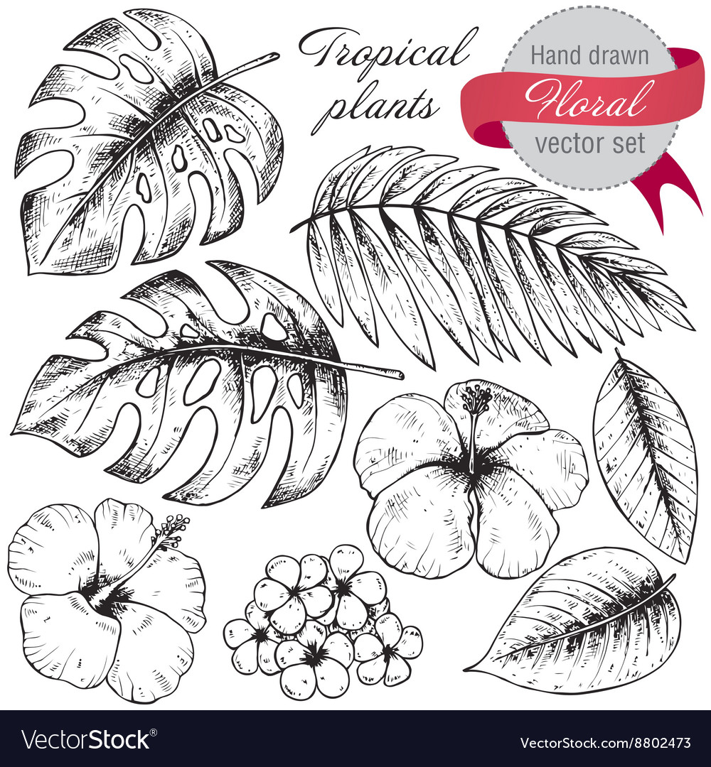 Set of black and white hand drawn graphic tropical