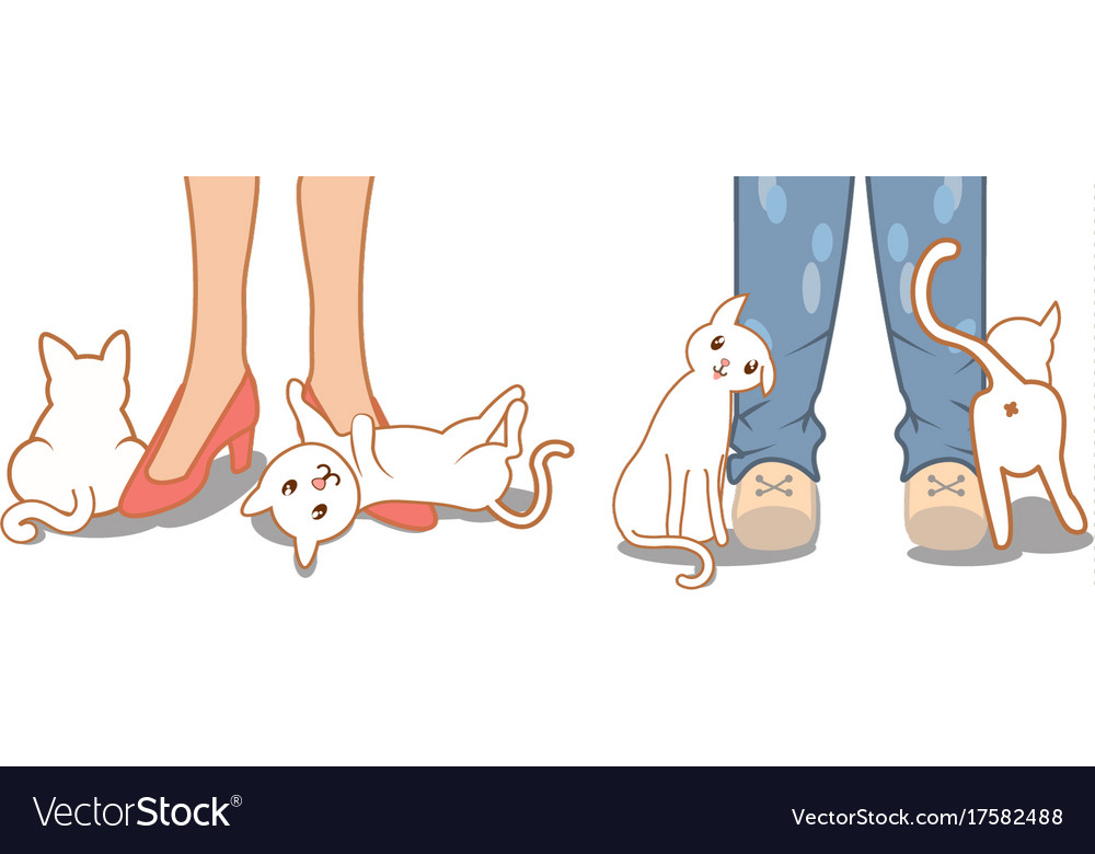 Cute Cat Rubbing Against Owner Legs And Feet Vector Image