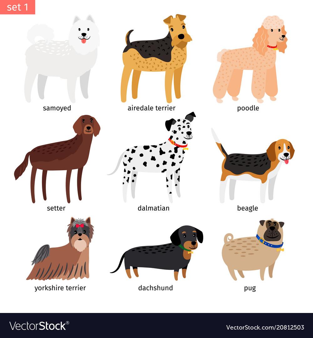 Dog breeds cartoon icon