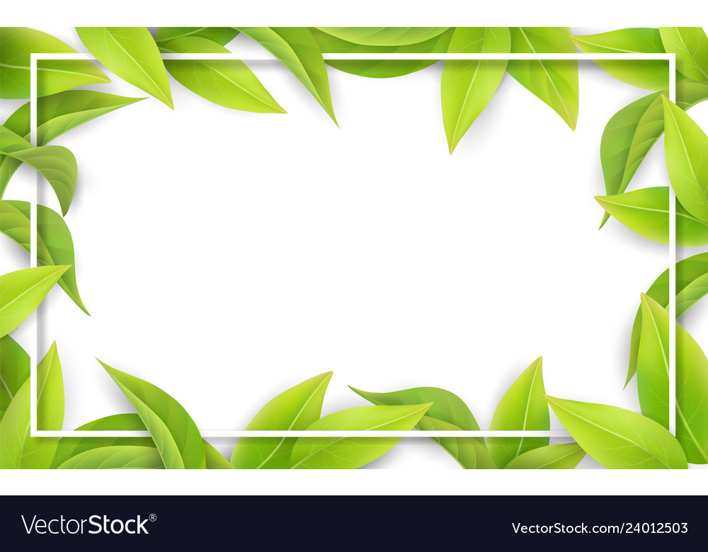 Green leaves on white background place for text