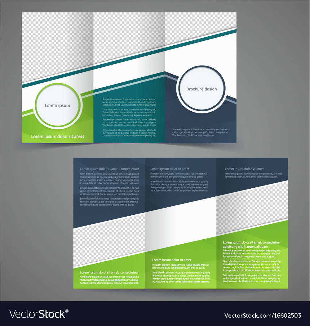 tri fold business brochure template two sided vector image