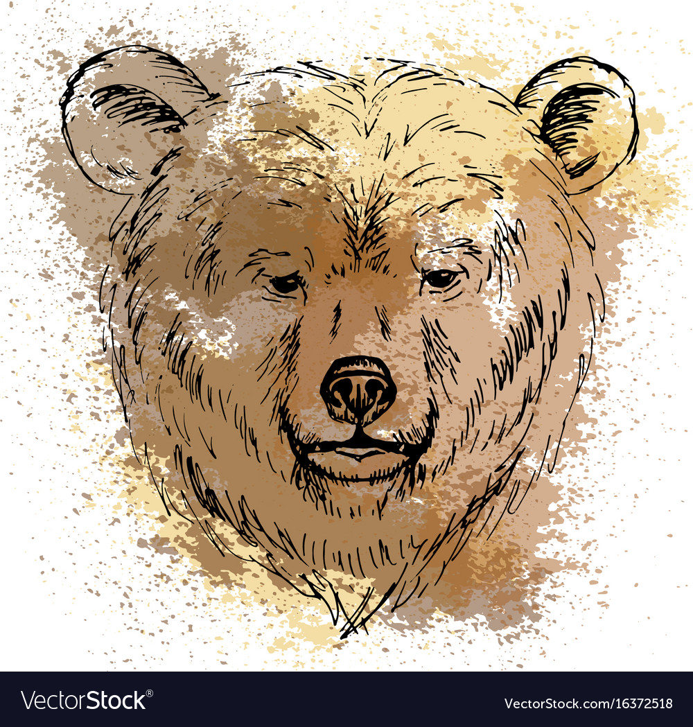 Sketch bear head on the colored background
