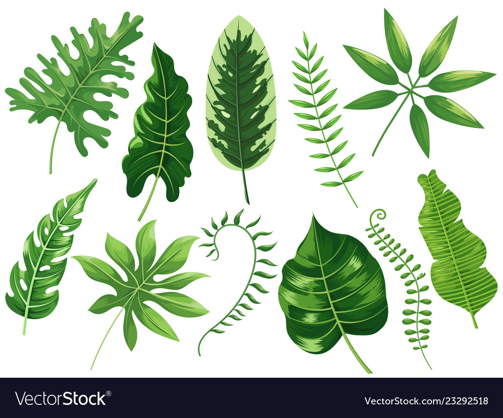 Tropical Leaves Exotic Tropic Leaf Botanic Vector Image Tropical pattern, palm leaves seamless vector floral background. vectorstock