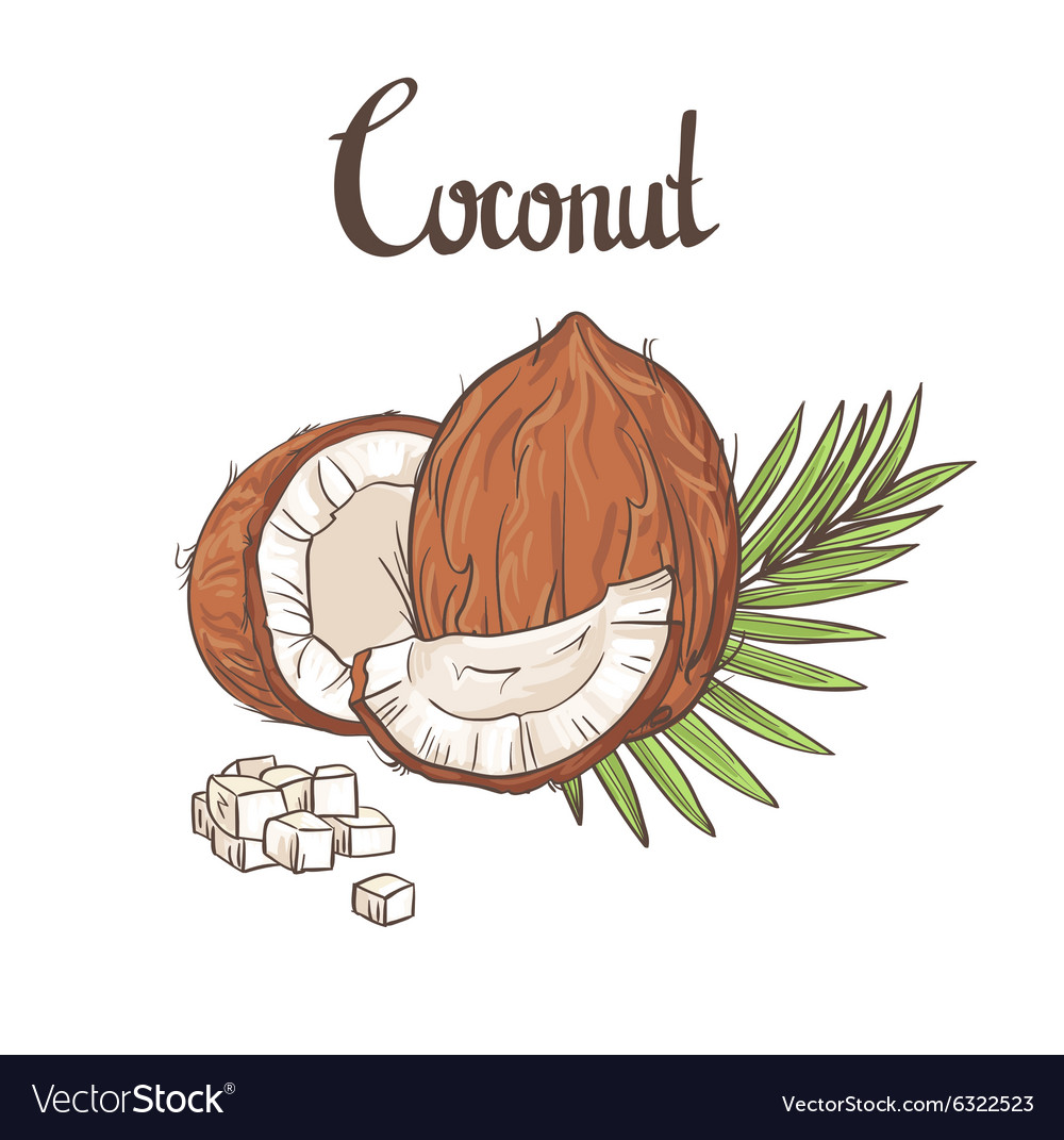 Coconut background