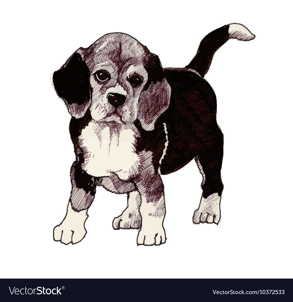 Sketched hound Puppy dog hand drawn vector image