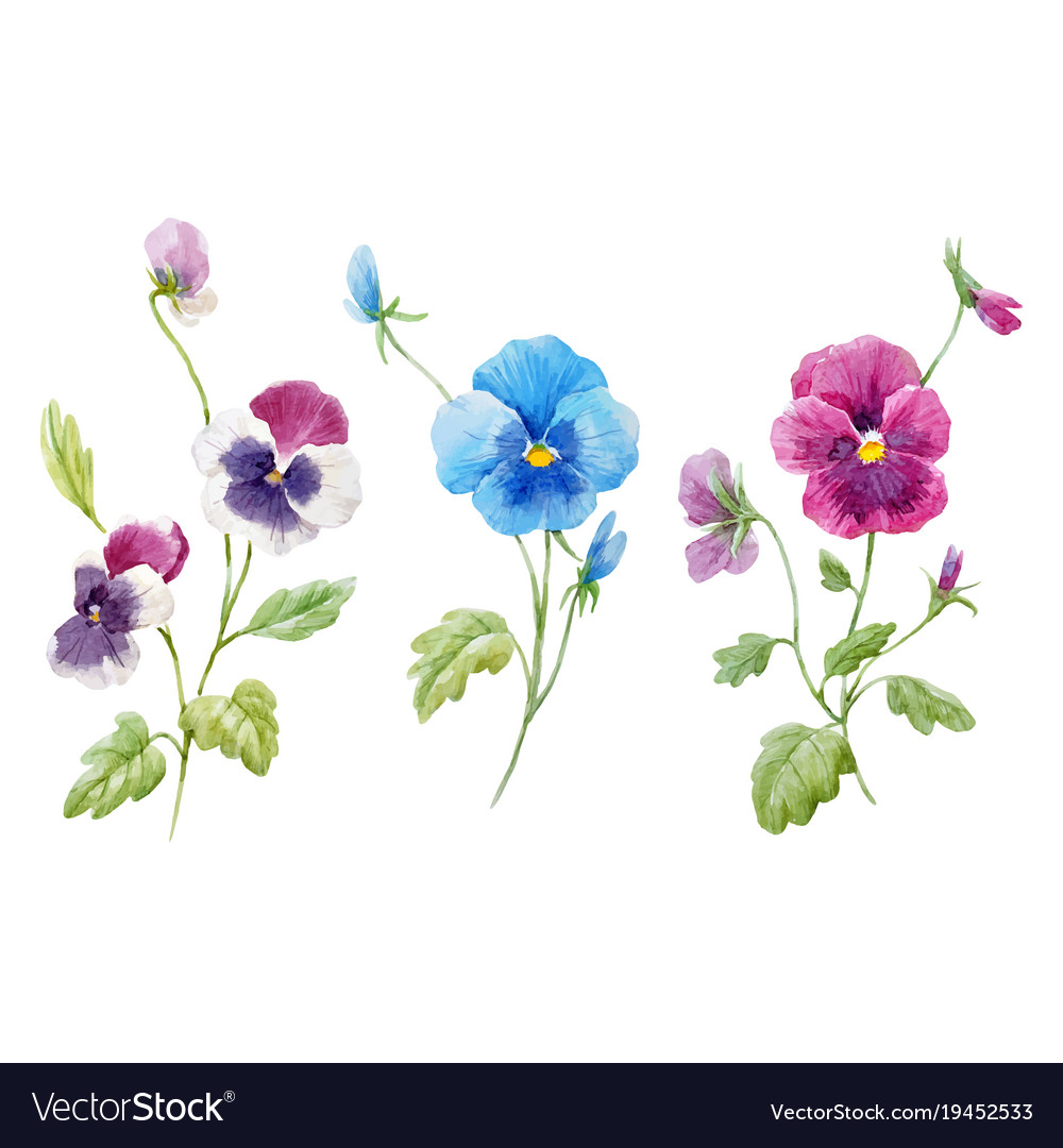Watercolor pansy flower set vector image
