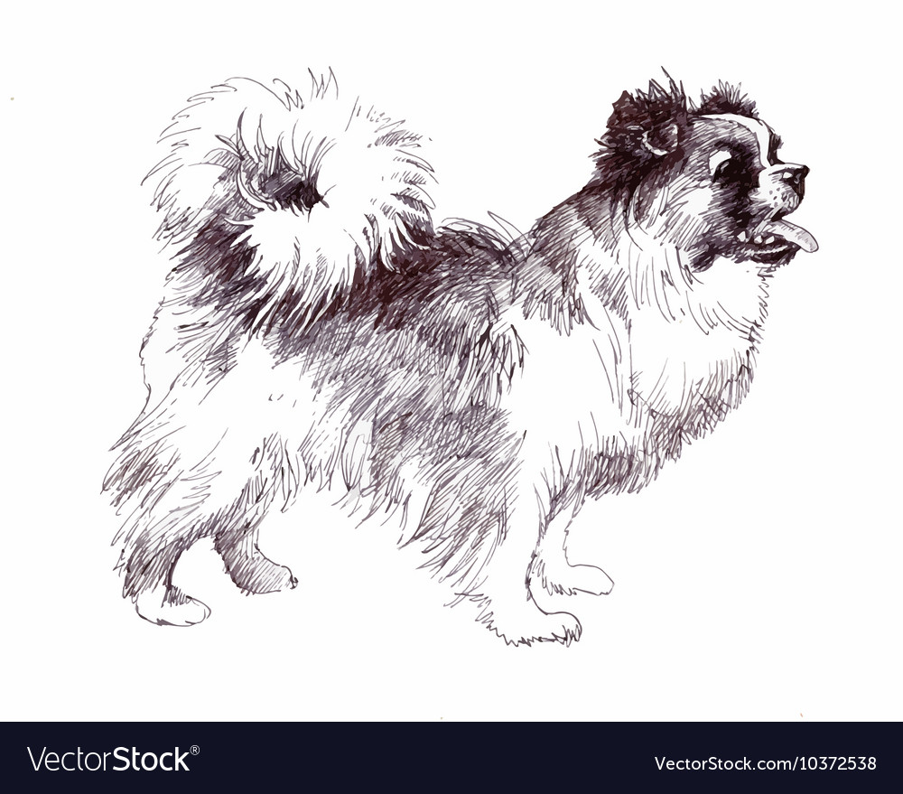 Sketched Puppy dog hand drawn vector image