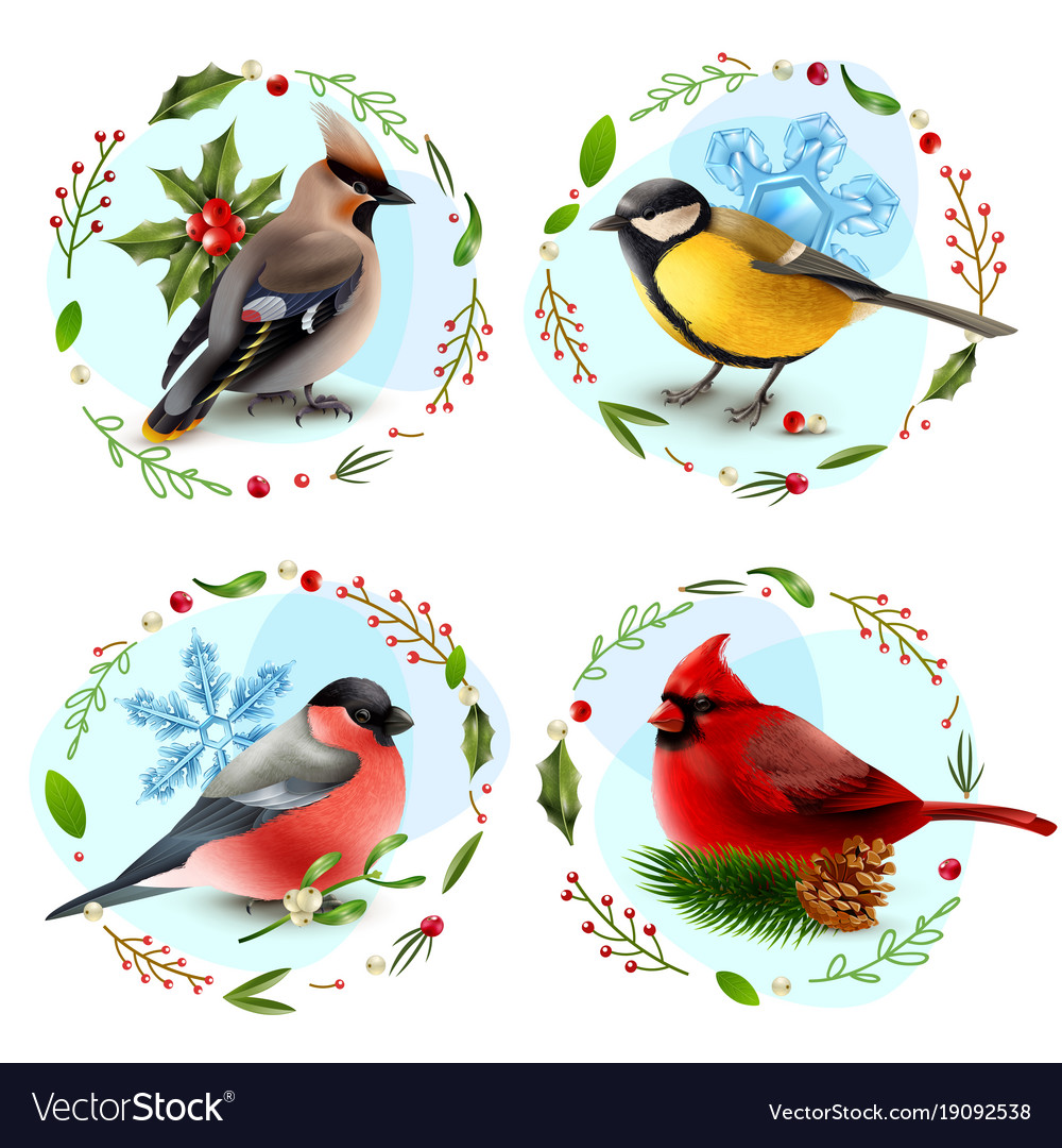 Winter birds design concept