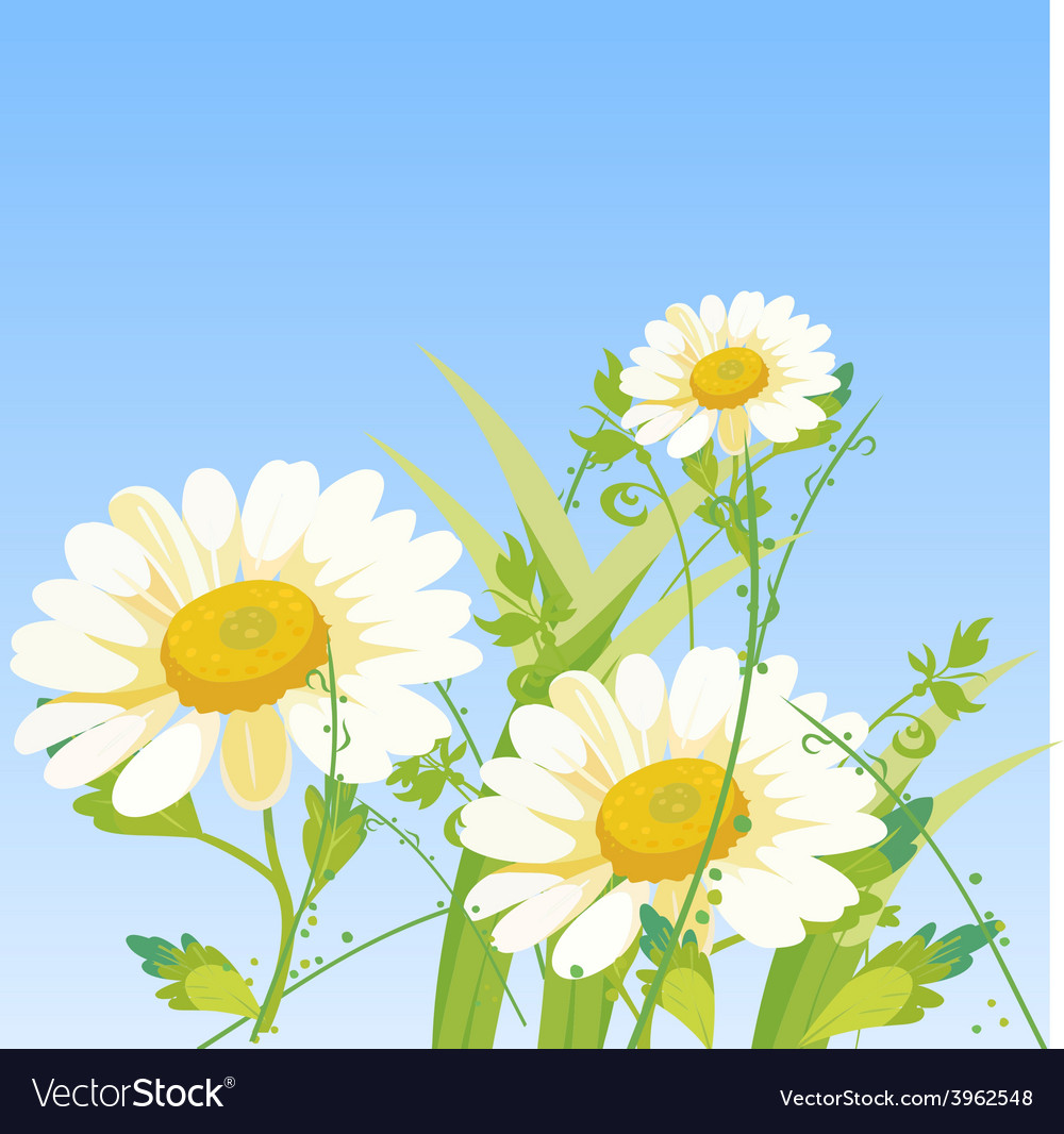 Cartoon daisy flowers royalty free vector image cartoon daisy flowers vector image izmirmasajfo