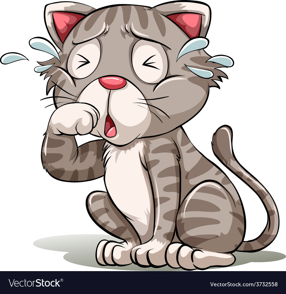 A crying cat vector image