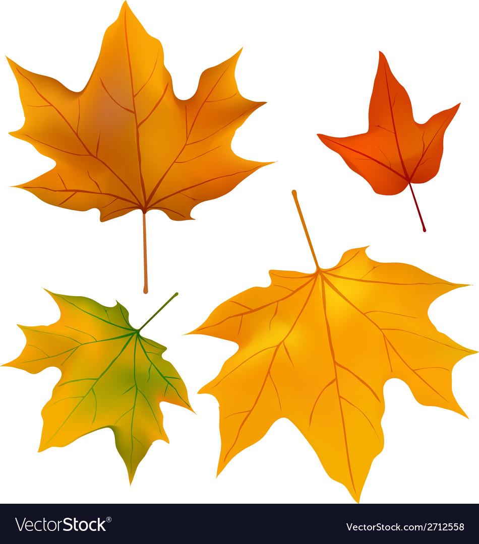 Foliage plants leaves background maple maple leaf