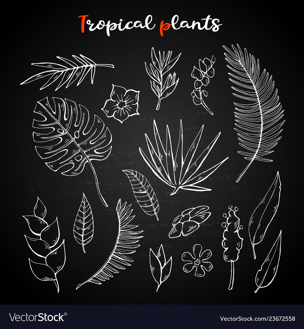 Tropical plants setcollection on a chalk