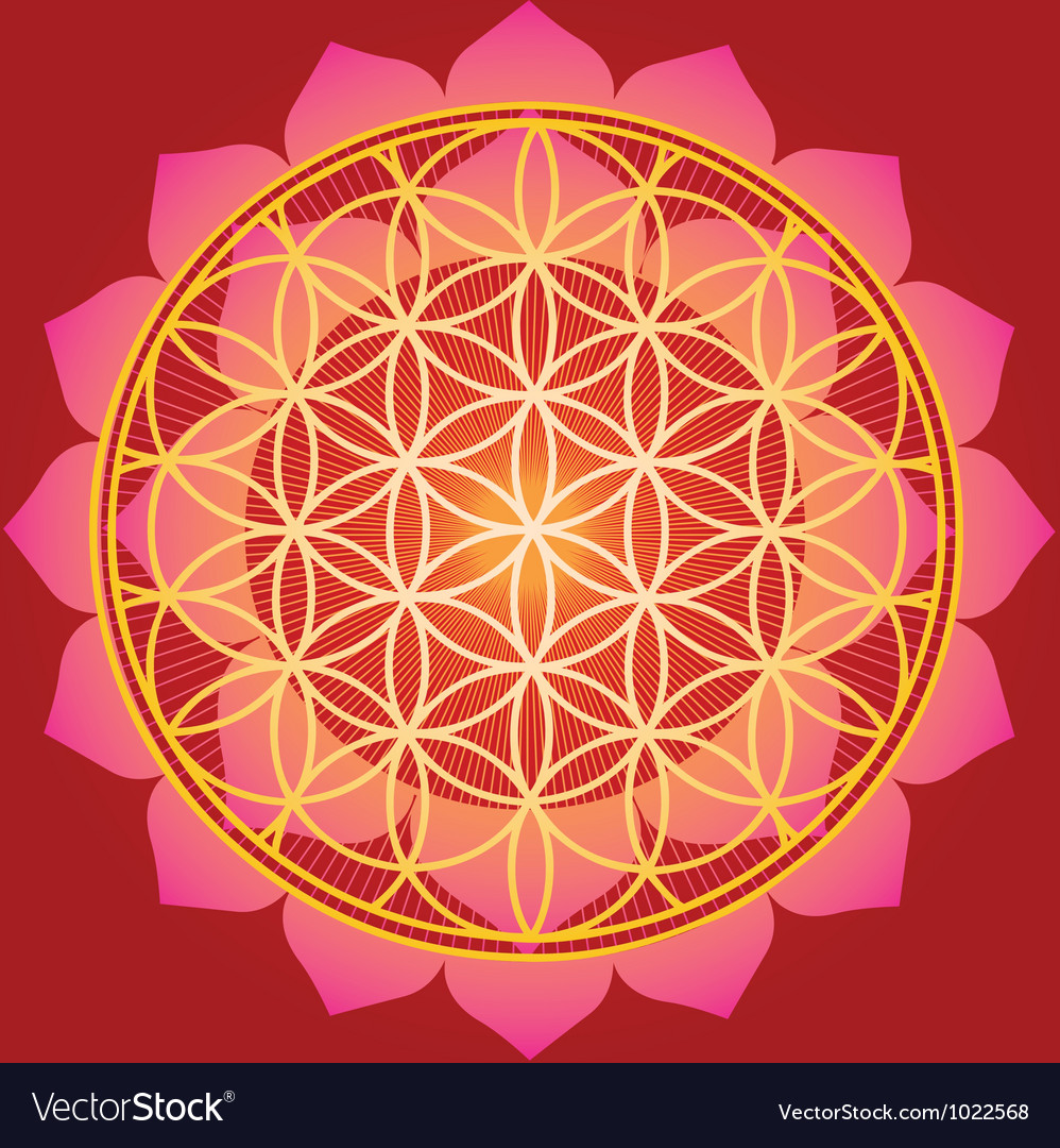 Sacred Geometry flower of life mandala vector image