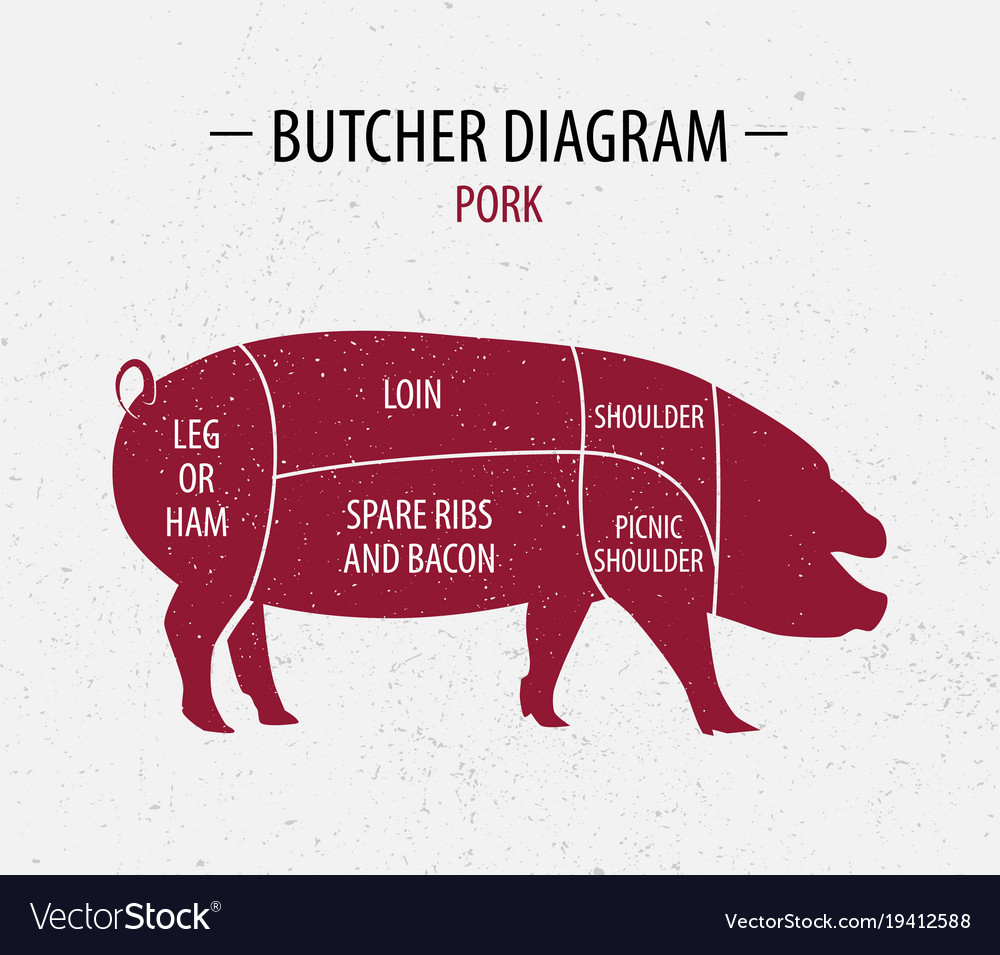 Pig Butcher Diagram | Cut Of Pork Poster Butcher Diagram Royalty Free Vector Image