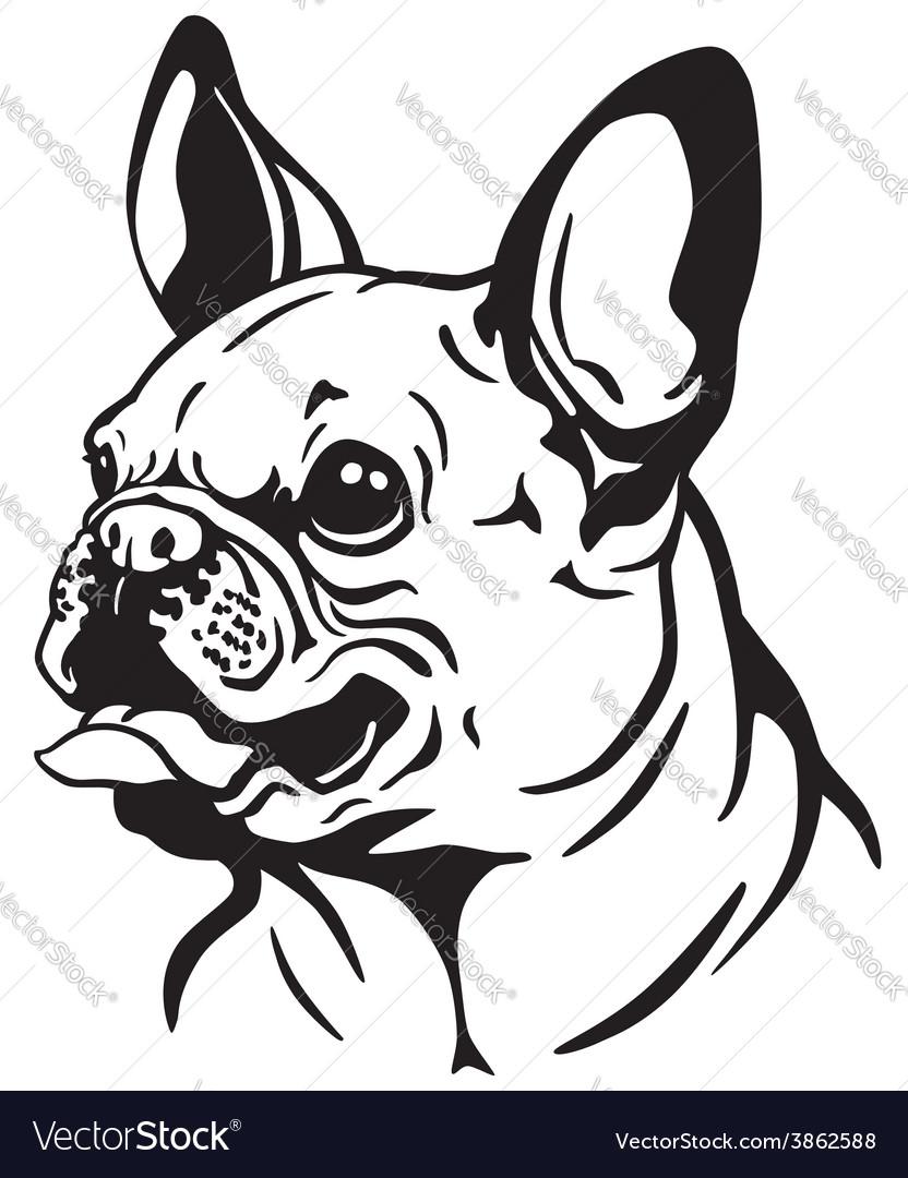 French bulldog black white